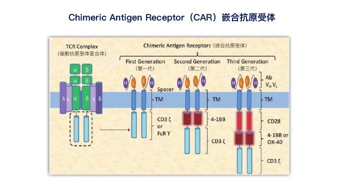 CAR-T疗法的发展过程